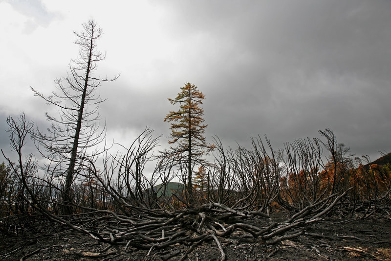 Aftermath of forest fire Colorado