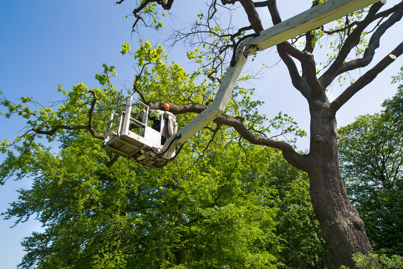 Tree trimming and pruning Colorado